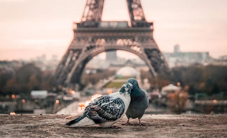 エッフェル塔と鳩